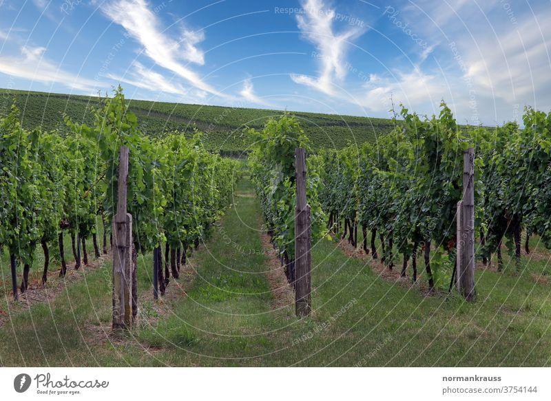 Weinberge in der Südpfalz weinberg reben weinanbaugebiet weinbau herbst weinlandschaft südpfalz grün landwirtschaft wolken himmel