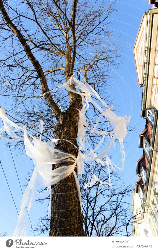 gefangen im Plastik | Baum am Straßenrand Thementag Folie Straßenbaum Häuserfront Stadt Stadtgrün Müll Plastikfolie Plastikmüll Umweltverschmutzung Kunststoff