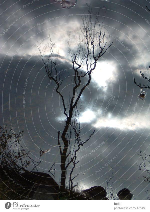 der Baum Wolken Spiegel Spiegelbild Gegenlicht Sonne Schatten reflektion tree clouds sun shadow reflection