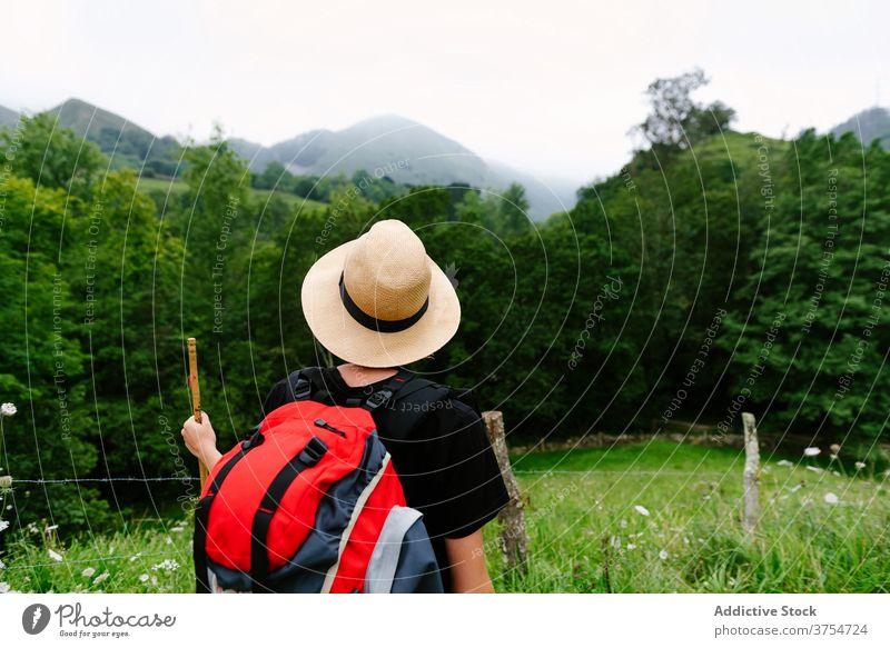 Tourist mit Rucksack im grünen Wald Reisender Trekking Wälder Sommer Entdecker Wanderung Natur Abenteuer Urlaub hölzern kleben Weg Tourismus Nachlauf erkunden