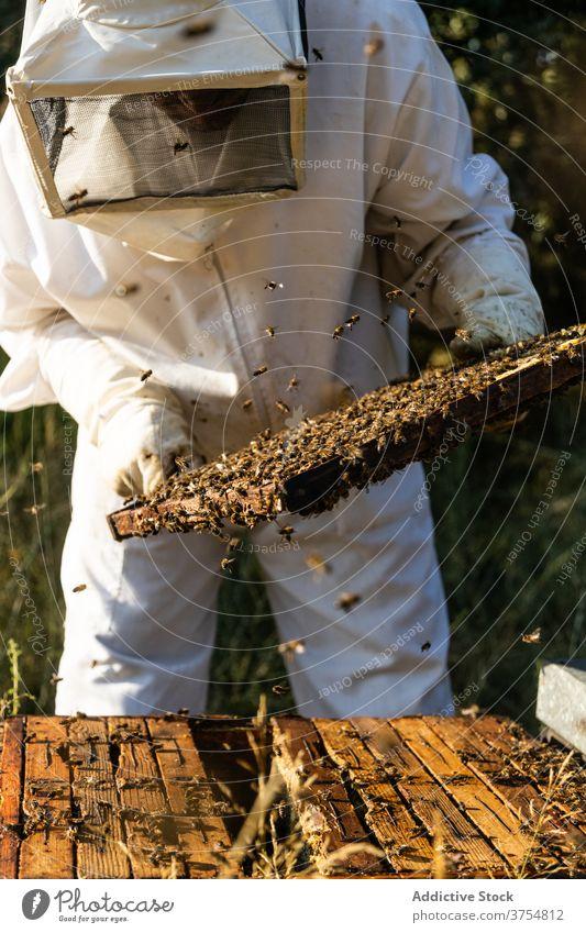Imker überprüft Wabenrahmen am Bienenstand Mann Bienenstock Arbeit Rahmen inspizieren prüfen Werkzeug untersuchen professionell Saison Job Prozess Bienenkorb