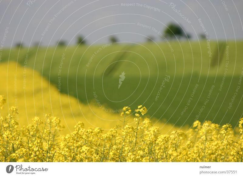 Weites Land, weite Blende grün gelb Landschaft Feld Hügel Landwirtschaft Raps