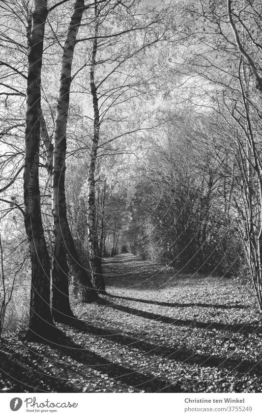 Ein Waldweg mit langen Schatten und fast kahlen Bäumen und Sträuchern Weg Einsamkeit Wege und Pfade Herbst Winter November Melancholie Traurigkeit Trauer