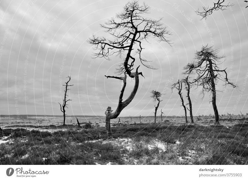 Hohes Venn im Nationalpark mit abgestorbenen Bäumen zur Winterzeit Eifel Himmel ruhig Steg Sumpf Pflanze Starke Tiefenschärfe Wege & Pfade Holz Moor schwarzweiß