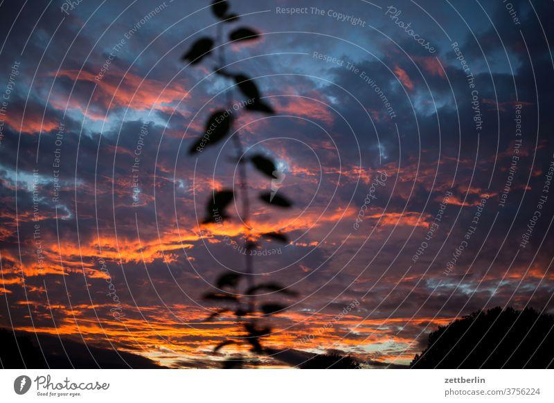 Sonnenuntergang mit Pflaumenzweig abend altocumulus drohend dunkel dämmerung düster farbspektrum feierabend froschperspektive gewitter haufenwolke himmel