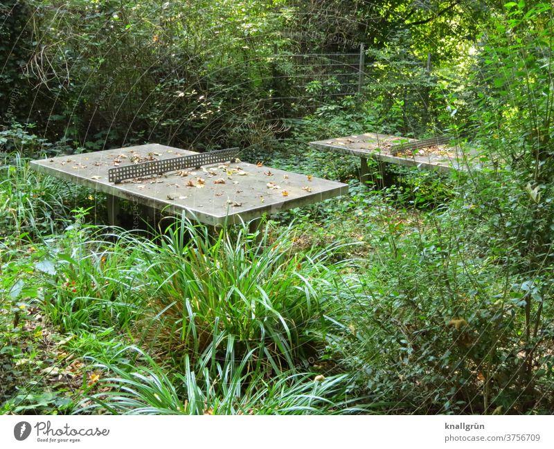 Zwei Outdoor-Betontischtennisplatten auf einem völlig überwuchertem Sportplatz Wildnis Natur Tischtennisplatte Spielen ungepflegt Unkraut wuchern Blätter