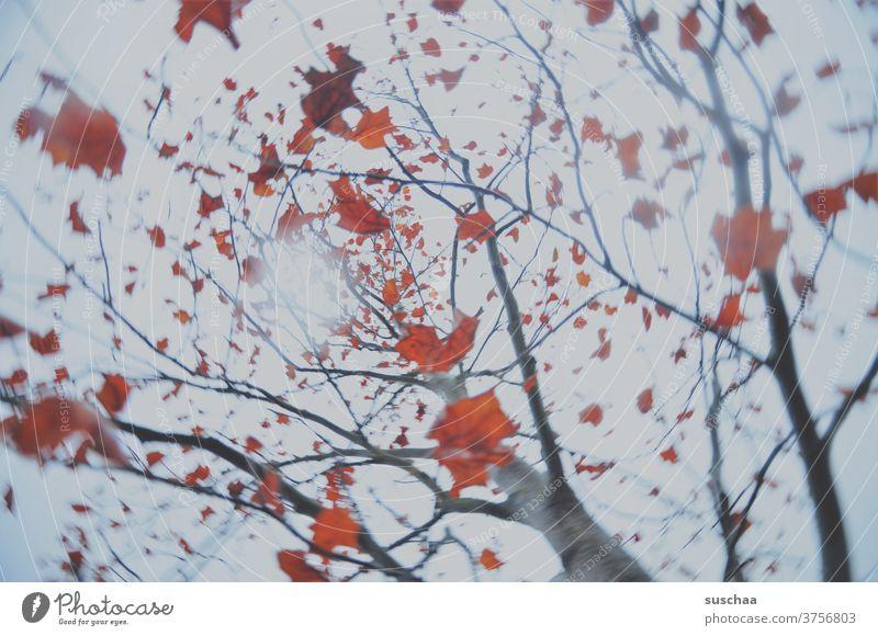 verdrehter herbstbaum mit rotem laub Herbst herbstlich Drehwurm Rotation Baum Laub Blätter Herbstlaub Baumstamm Äste Herbstfärbung Zweige u. Äste Herbstbeginn