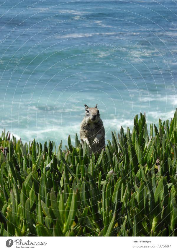 wassup homie Natur blau grün Wasser Meer Tier Umwelt Küste lustig grau braun Wildtier Wellen frei stehen beobachten