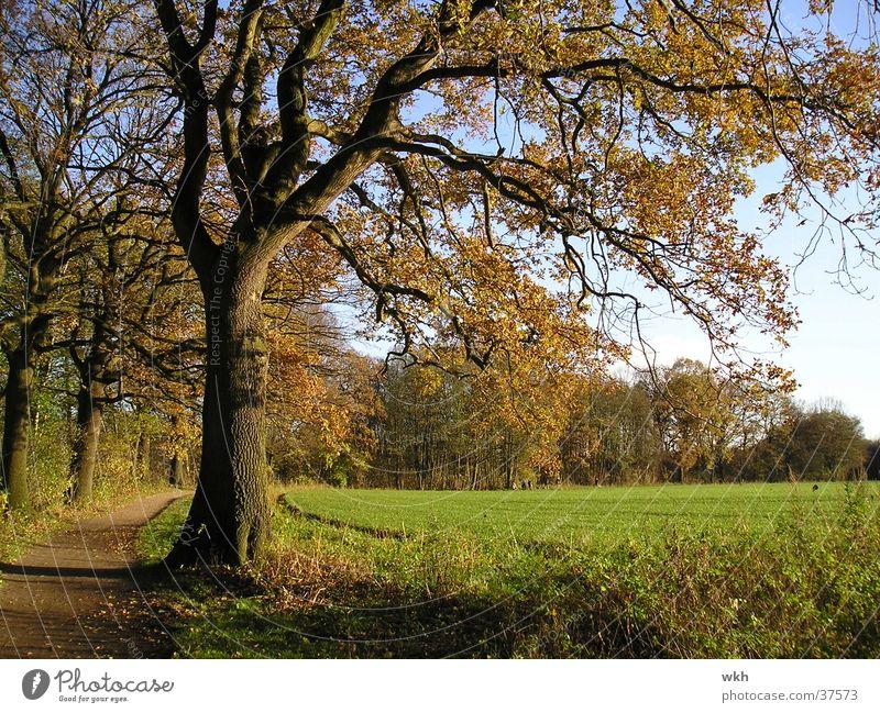 Eiche im Herbst Baum November Herbstlaub