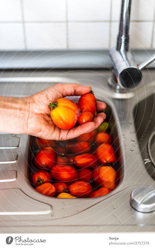 Mann wäscht rohe Tomaten in einem Spülbecken voller Wasser. Nahaufnahme. Hand Waschen Spülbecken Spüle rot Reinigen Farbfoto frisch nass teilabschnitt