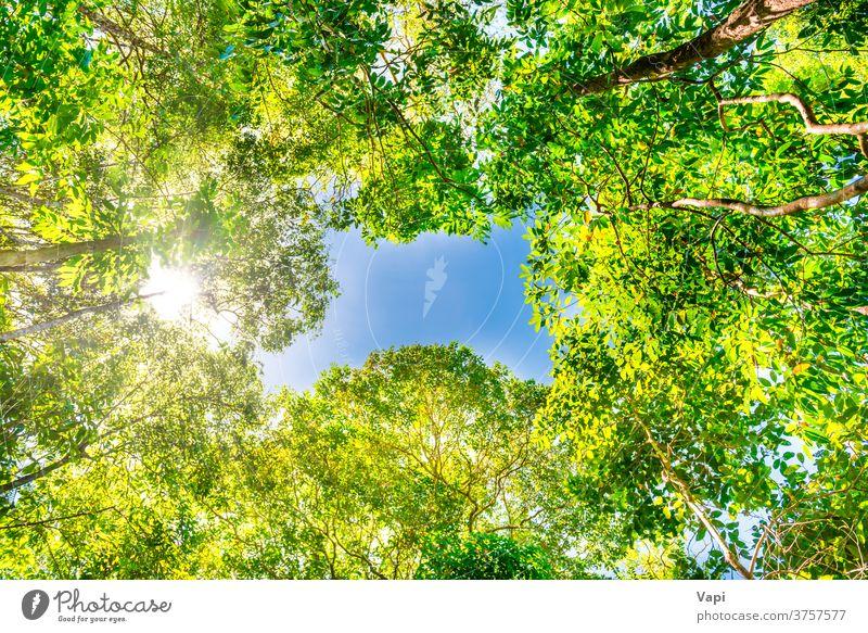 Naturgrüner Wald mit großen Bäumen Baum Dschungel Himmel Top hell Sommer gelb Herbst schön sonnig Sonnenlicht Landschaft blau Frühling Saison Hintergrund