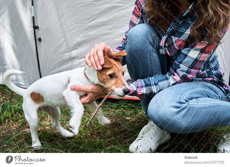 Frau mit Jack-Russell-Terrier-Welpen im Freien. Beziehungen und Tierpflegekonzept Hund Haustier Besitzer Glück niedlich Freundschaft Spielen Lifestyle Spaß Gras