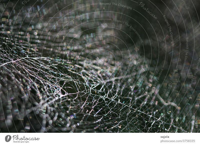 vernetzt Spinnennetz Netz Spinnenfäden Natur Außenaufnahme Nahaufnahme Makroaufnahme Schwache Tiefenschärfe Netzwerk Muster Strukturen & Formen
