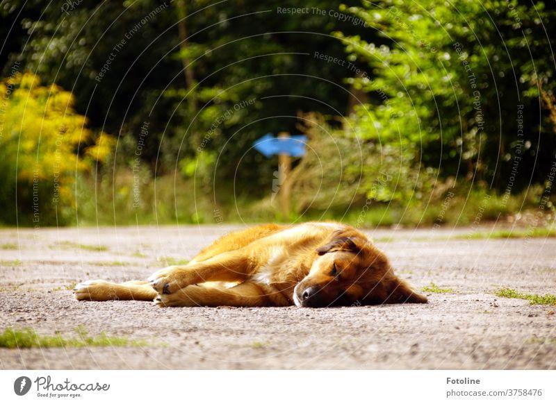Ihr wollt abreisen? Na dann müsst ihr erst mal an mir vorbei - oder Ilse liegt auf dem Weg und lässt sich die Sonne auf den Pelz scheinen. Hund Säugebier Wald