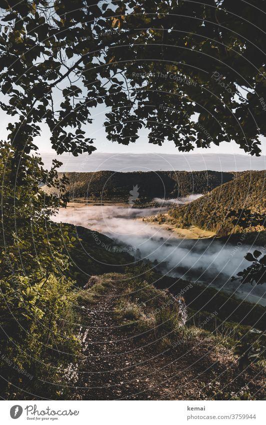 Der Blick ins Tal mit Nebel Morgennebel Frühnebel Licht Schatten Frühling grün Baum Wald Landschaft frisch leuchten Natur Menschenleer Umwelt Stimmung