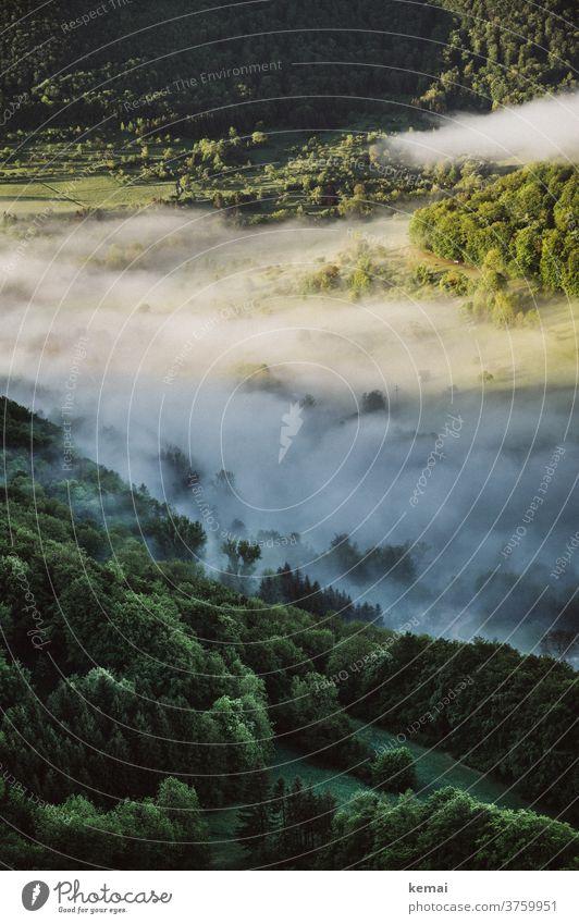 Nebel im Tal Morgennebel Frühnebel Licht Schatten Frühling grün Baum Wald Landschaft frisch leuchten Natur Menschenleer Umwelt Stimmung
