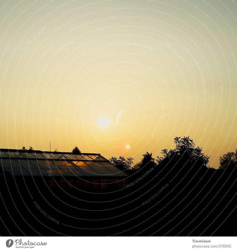 Ick gloob ick spinne | Zwei Sonnen! Umwelt Himmel Sonnenaufgang Sonnenuntergang Sonnenlicht Pflanze Baum Gewächshaus Glas ästhetisch außergewöhnlich natürlich