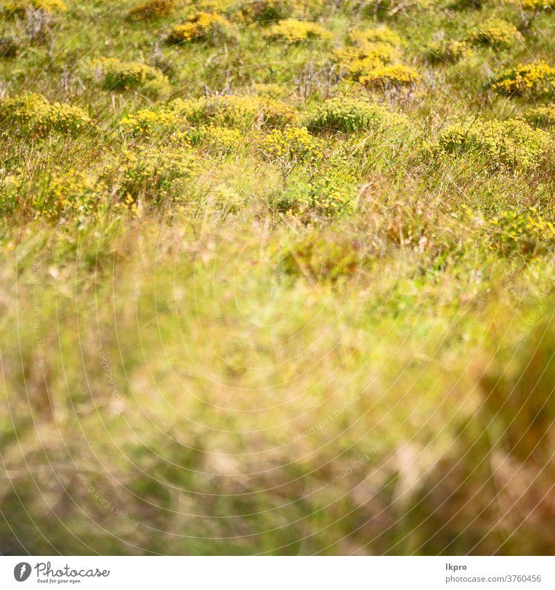 abstraktes Gras wie Hintergrund verwischen trocknen gelb Textur Natur Heu braun Muster natürlich Feld Pflanze grün Sommer Herbst Nahaufnahme Umwelt gold tot