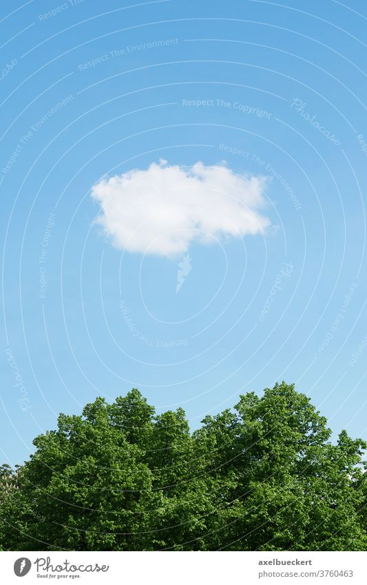 blauer Himmel mit einzelner Wolke Baum Natur Umwelt Sommer Wetter Cloud Bäume ruhig Wolken Meteorologie Ökologie Freiheit Hintergrund eine niemand Tag im Freien