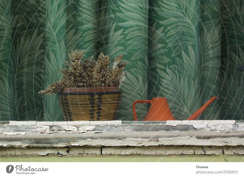 Fenster mit vertrocknetem Kaktus, oranger Gießkanne und grünem Vorhang mit floralem Muster Pflanze Topfpflanze tot Gardine alt verlassen Leerstand Grüner Daumen