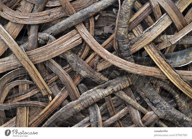back to the roots | Muster aus Wurzeln und Holz Hintergrund natürlich Natur Geflecht verschlungen verschlingen Schlinge wachsen braun Konzept konzeptionell