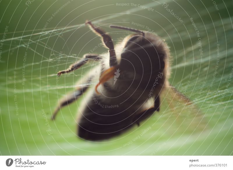 +++ gefallen +++ Natur Tier Tod Vergänglichkeit Ende Insekt Spinnennetz Wespen Totes Tier