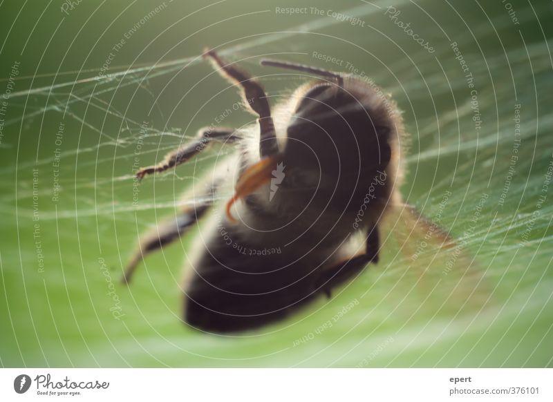+++ gefallen +++ Tier Totes Tier Wespen Insekt Spinnennetz 1 Tod Ende Natur Vergänglichkeit Farbfoto Nahaufnahme Detailaufnahme Schwache Tiefenschärfe