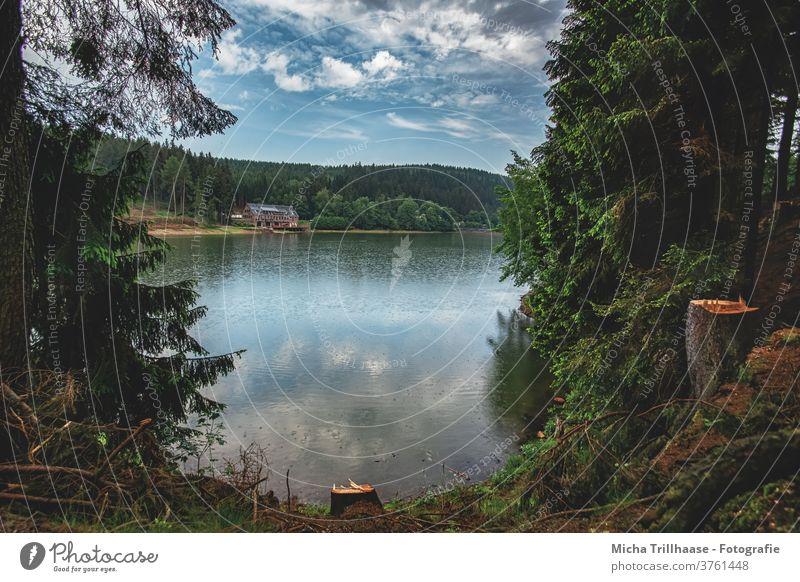 Blick auf den See Talsperre Lütsche Wasser Wald Thüringer Wald Thüringen Bäume Himmel Wolken Natur Landschaft Menschenleer Regen Idylle Außenaufnahme Farbfoto