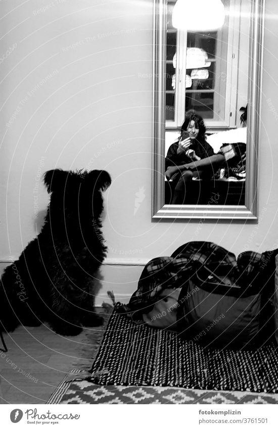 Selfie mit Hund von Frau vor Spiegel Mensch und Hund Haustier Selbstportrait dunkle Jahreszeit dunkel Stimmung Winterstimmung spiegelbild lampe hund