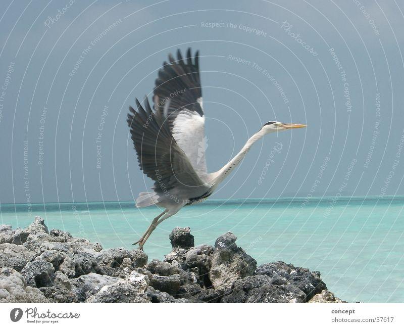 Abflug Meer Sommer Strand Verkehr Malediven Vogel Kranich