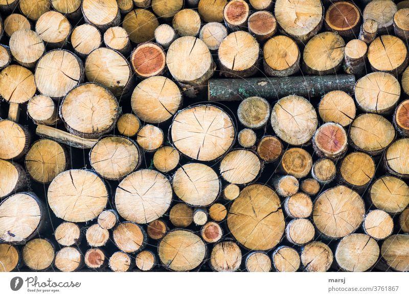 Einer muss doch aus der Reihe tanzen in einem Stapel gleichgesinnter Brennholzscheiter. Brennstoff Holzstapel braun gestapelt idyllisch natürlich Nachhaltigkeit