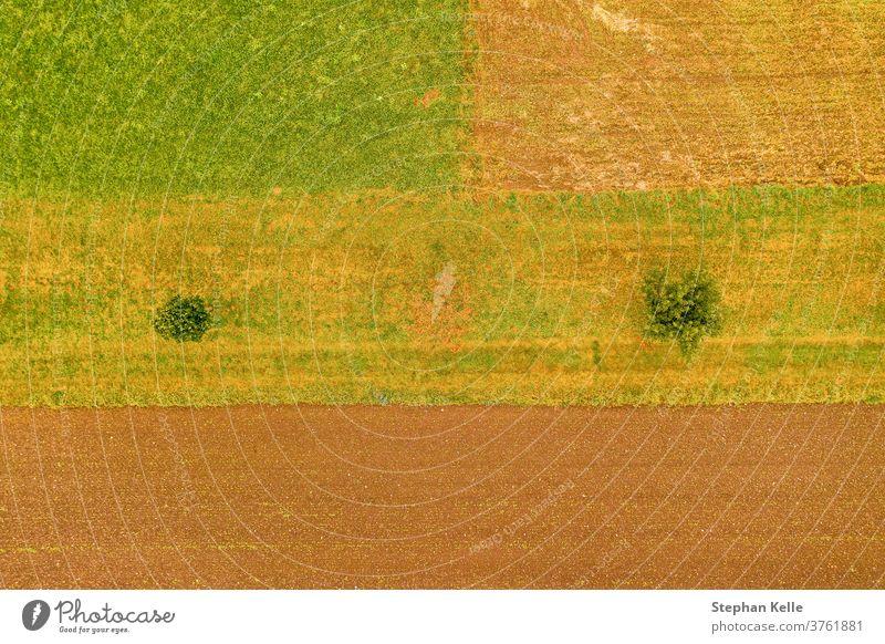 Luftaufnahme von oben auf ein Feld mit zwei Bäumen, eine Art Minimalismus, orange, natürliches Hintergrundfoto. Antenne Reihe Wiesen Draufsicht Bereiche