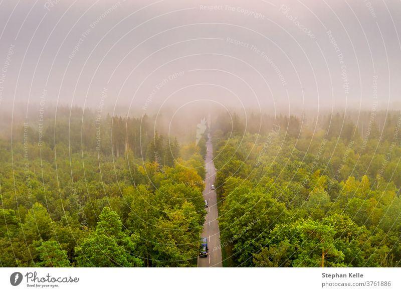 Luftaufnahme des Autoverkehrs auf einer Straße zwischen einem Wald bei Nebel, schöne neblige Sicht aus der Vogelperspektive. PKW abstrakt Baum Sommer Natur