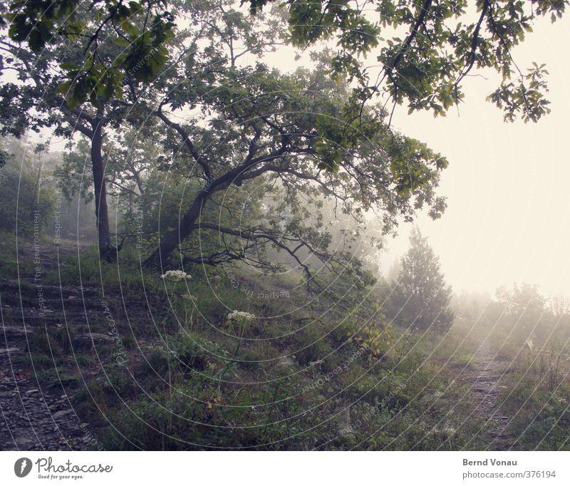 Zwei Möglichkeiten Natur Sonnenaufgang Sonnenuntergang Baum Gras Sträucher Wald Hügel Erholung genießen Blick wandern Stimmung ruhig grün gelb Sonnenlicht Nebel