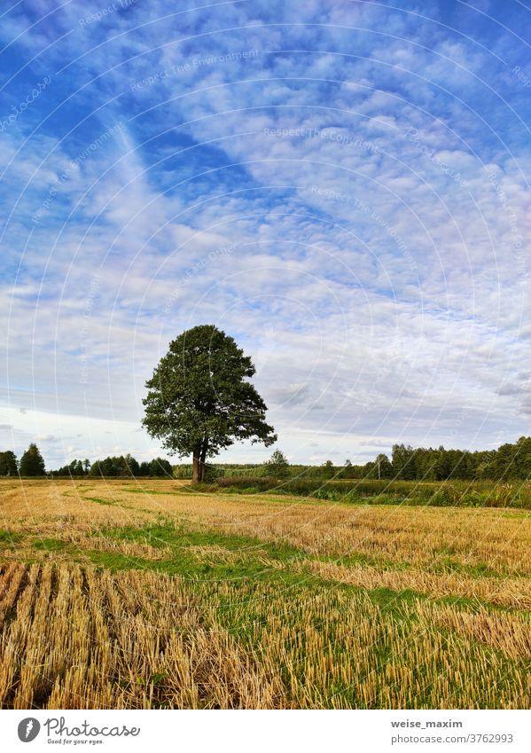 Herbstlandschaft im abendlichen Sonnenlicht von oben. Sommerhintergrund mit Erle Baum fallen Fluss sonnig Wasser September Natur Reflexion & Spiegelung blau