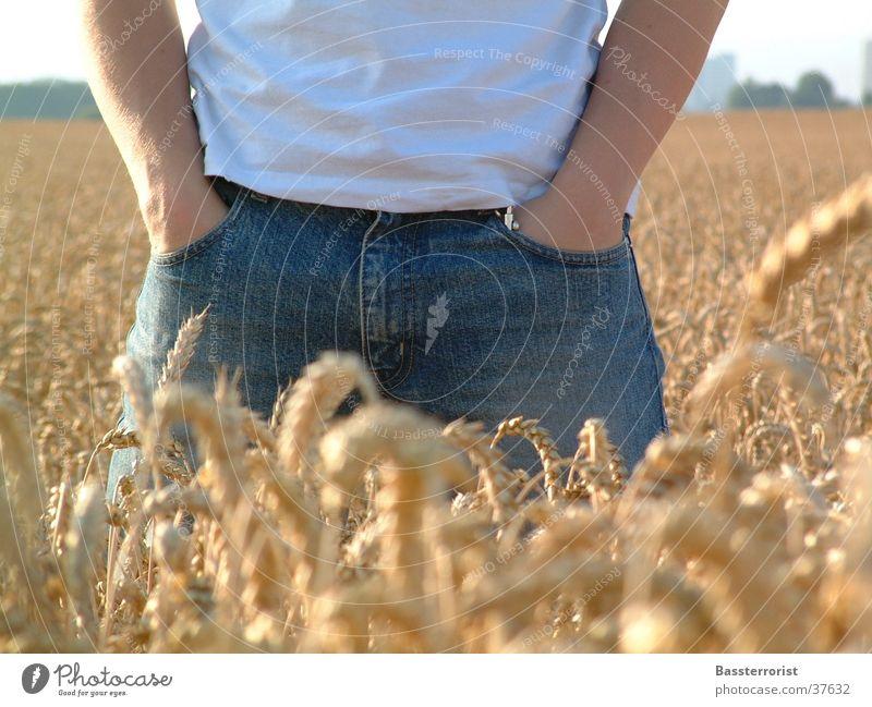 Jeans Im Kornfeld Mann Sommer Jeanshose