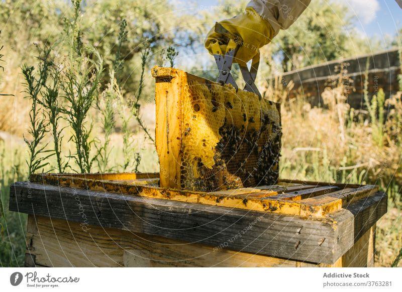 Imker mit Wabe im Bienenstock Liebling abholen Bienenkorb Arbeit Job Garten behüten Uniform Tracht Arbeiter Werkzeug Fähigkeit Ökologie Beruf beschäftigt Wehen
