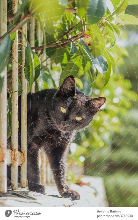 Kleine schwarze Katze, die sich durch einen weißen Zaun an einer Mauer quetscht, umgeben von grünen Blättern. Versucht, die Kamera zu erreichen, um sie zu inspizieren