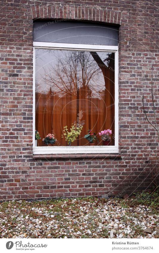 kunstblumen und gardine im fenster mit spiegelung fensterbank blumenvase blumentöpfe blüten alpenveilchen blumendeko reflektion reflexion ziegelsteine retro