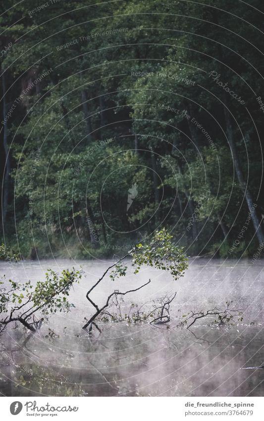 Moor in Brandenburg Schwerzko moorlandschaft grün wald see ast zweig wasser bach fluss Natur Außenaufnahme Farbfoto See Sumpf Wasser Bach Baum Ast Wald Fluss