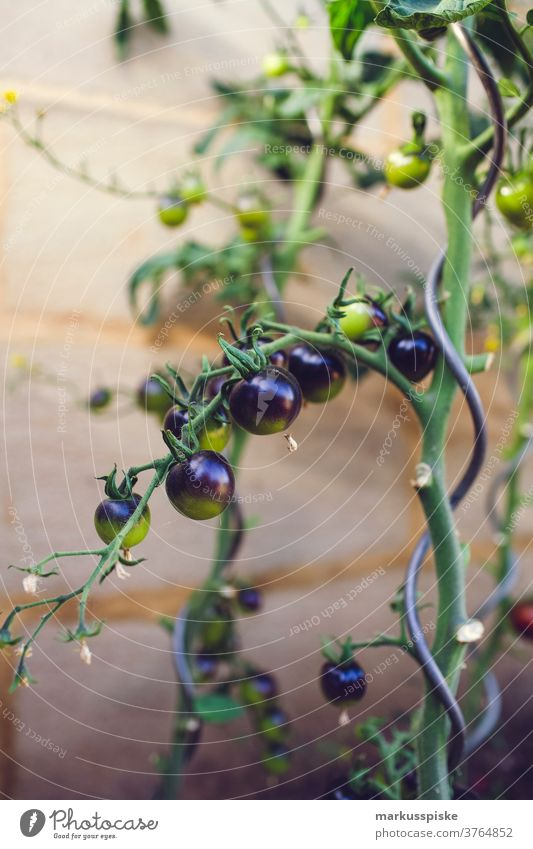 Urban Gardening Selbsthilfe - Tomate Ackerbau Lauch Bohne Biografie Blütezeit züchten Zucht Brokkoli Möhre kontrollierte Landwirtschaft Zucchini