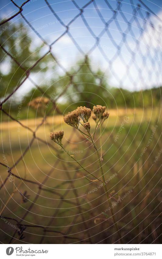 Wildnisblume am Zaun schön Schönheit Farbenpracht Blütezeit Bokeh hell braun Haufen Nahaufnahme farbenfroh Landschaft Phantasie Flora geblümt Blume Blumen