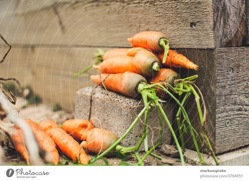 Urban Gardening ernten frische Bio-Möhren Ackerbau Biografie Blütezeit züchten Zucht Kindheit Wintergarten kontrollierte Landwirtschaft Ernte Bodenbearbeitung
