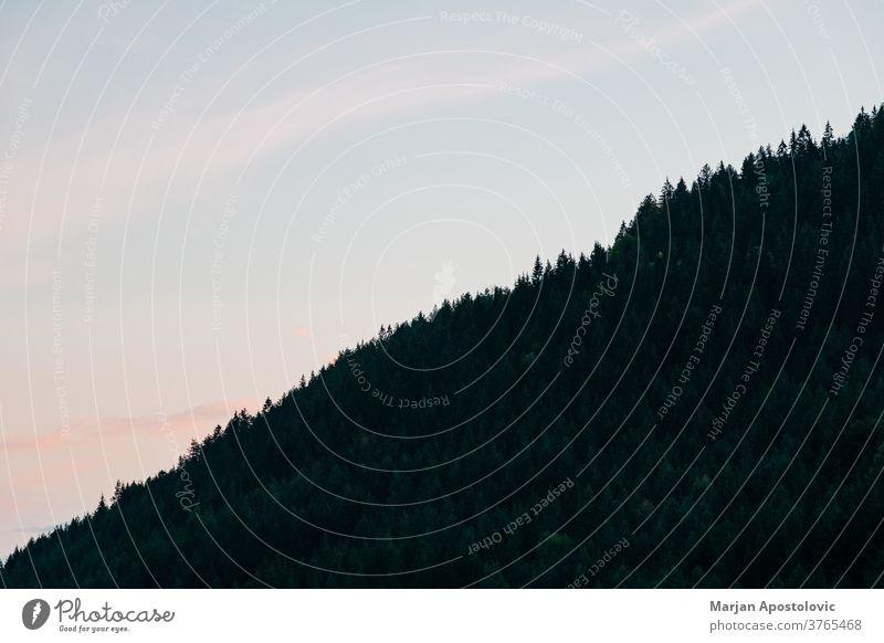 Blick auf den Wald in den Bergen Abenteuer Hintergrund schön Schönheit blau Klima Cloud Wolkenlandschaft wolkig Kumulus Tag Umwelt erkunden Freiheit grün hoch