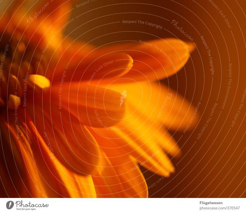 Brüh im Glanze Natur Pflanze Blume Tier Blatt Umwelt Blüte Blühend Rose Blumenstrauß exotisch Tulpe Blumentopf Blumenwiese Orchidee Nutzpflanze
