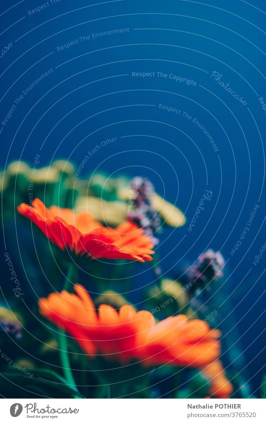 Bunte Blumenkomposition. Blumenstrauß aus mehrfarbigen Blumen Haufen Natur schön Dekoration & Verzierung frisch geblümt Blüte Blütezeit Flora Geschenk Frühling