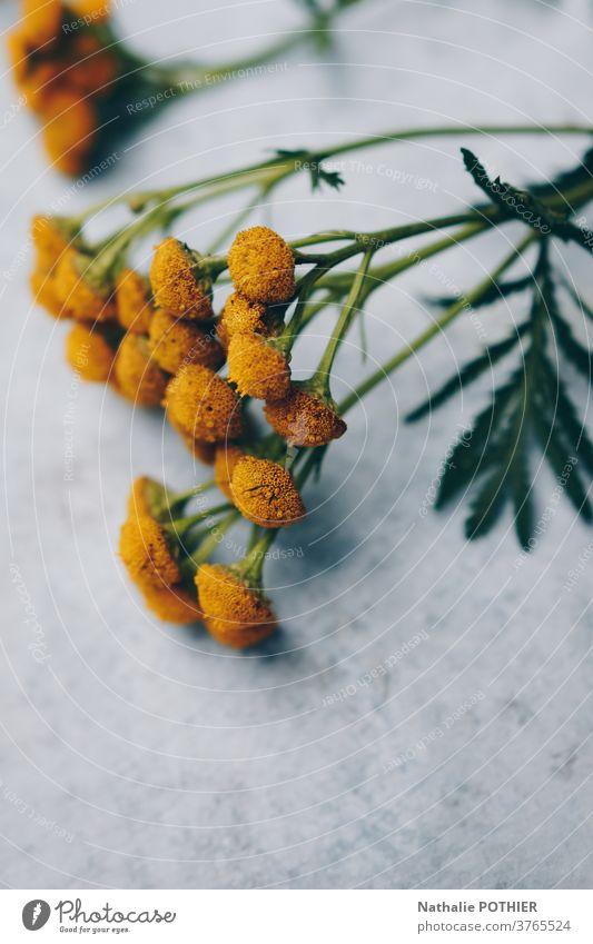 Gelbe Blumen aufgereiht auf einem konkreten Hintergrund grün gelb schön Blüte Dekoration & Verzierung geblümt Sommer Pflanze Frühling frisch Raum Natur