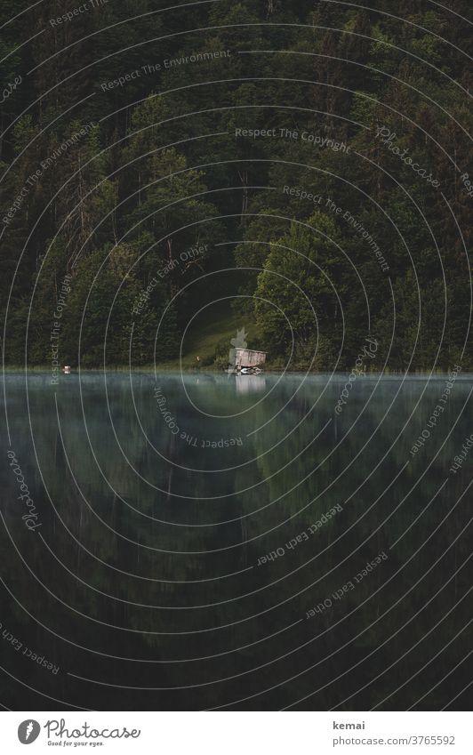 Hütte am Seeufer Wasser Wasseroberfläche Holzhütte einsam grün Reflexion & Spiegelung Frühnebel Morgennebel morgens Natur Landschaft Wald Baum Naturliebe