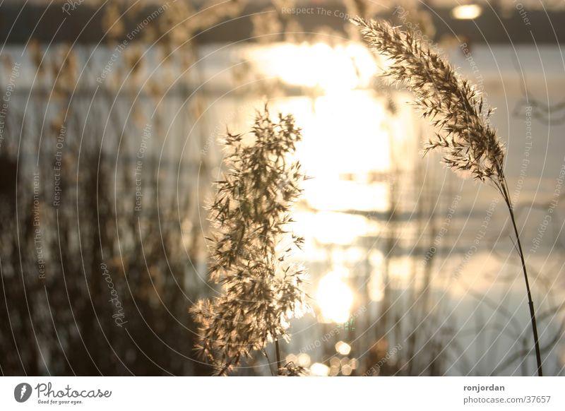 Wintersonne Wasser Sonne Abenddämmerung