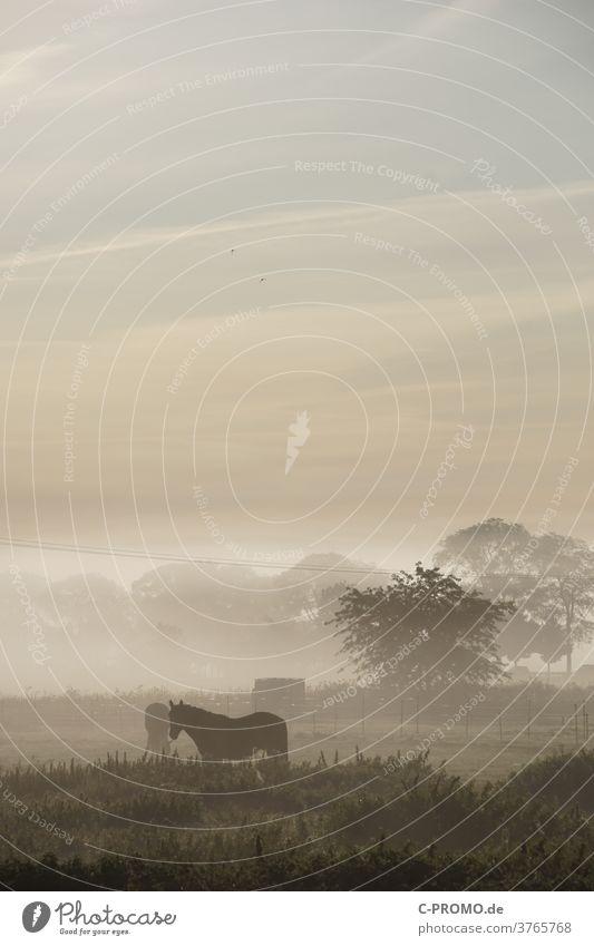 Pferdekoppel im Morgennebel Nebel Nebelstimmung Nebelschleier Bäume am Horizont Strommast Wolken